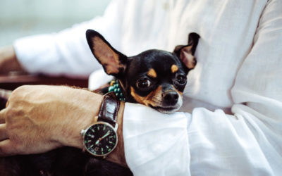 Private Equity's Love Story with the Pet Industry – Part II